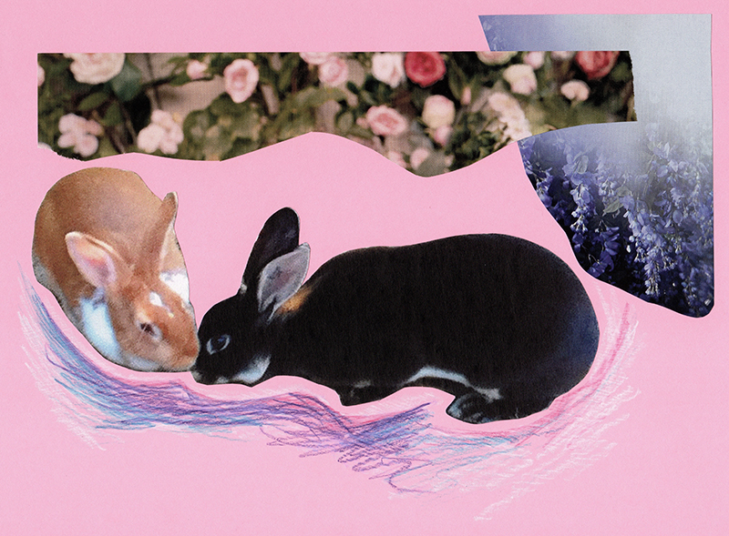 Collage of a bunny rabbits.